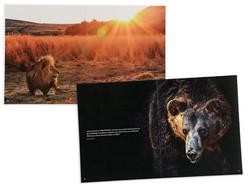 AMWERK_VIERPFOTEN-KAMPAGEN-Brochure03