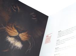 AMWERK_VIERPFOTEN-KAMPAGEN-Brochure08
