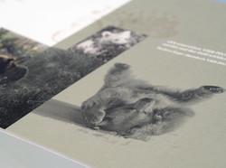 AMWERK_VIERPFOTEN-KAMPAGEN-Brochure07