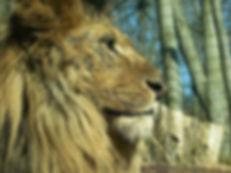 Eberswalde_zoo_014.jpg