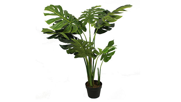 Potted Plants-01_1280x720.jpg