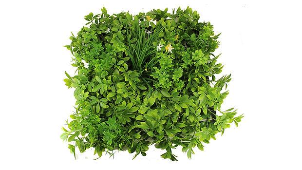 Boxwood Foliage mat-01_1280x720.jpg