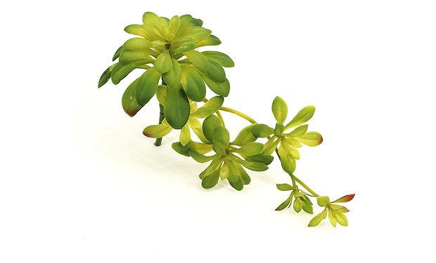 Succulent-01_1280x720.jpg