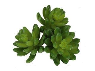 artificial succulent