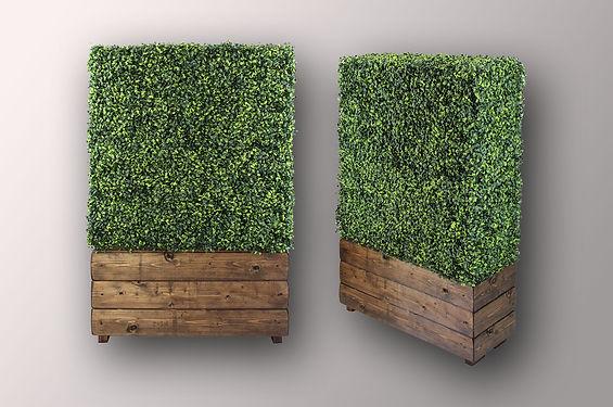 BOXWOOD Hedge 1 .jpg