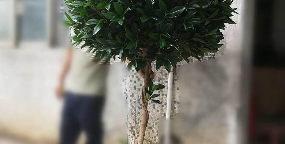 Nearly Natural Bay Leaf Topiary UV Resistant Tree