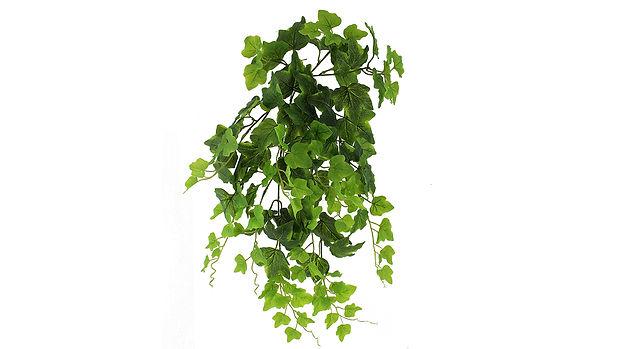 Hanging Plants-01_1280x720.jpg