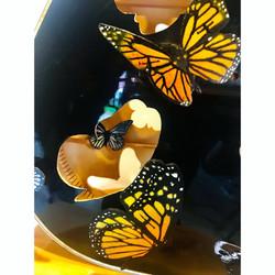 Acoustic Butterflies Kurkjy X Dozer insi