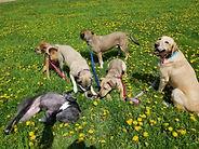 Doggone Obedience Dog Walking and Traini