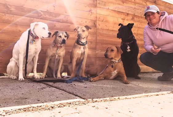 Doggone Obedience dog walking and training Somerville and Medford ma