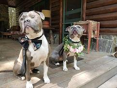 Doggone Obedience Dog Training