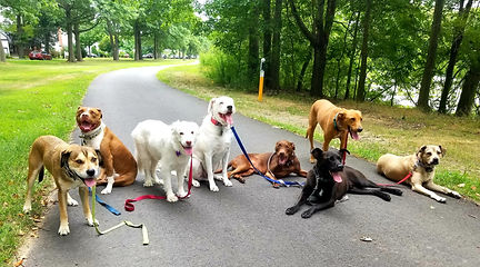 Doggone Obedience Dog Walking