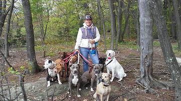 Doggone Obedience Pack.jpg