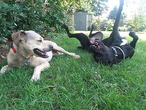 Doggone Obedience Dog Training .jpg