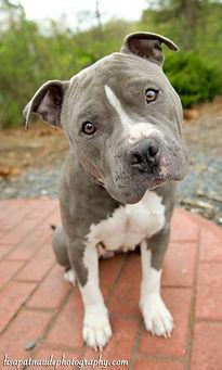 Doggone Obedience Dog Training.jpg
