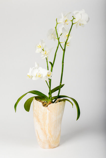 Orchid Holder Decorative Piece