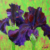 Purple Iris Pair