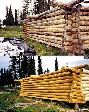 Log_Shell_Restoration_nwt10.jpg