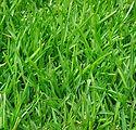 plante-gress_EK-plantesalg_01.jpg