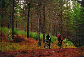 Mountain Biking_9379.jpg