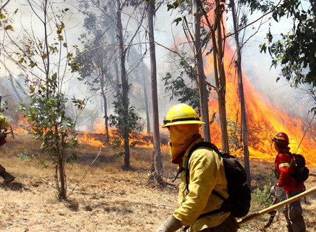 Incendios en Wallmapu