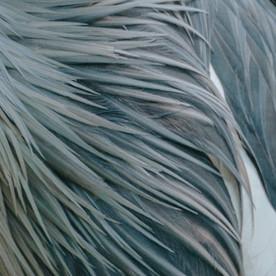 SIRENS | Kate Crowcroft