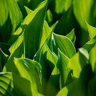 Leaf 6.jpg