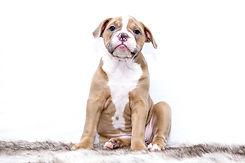 puppy-1118584_1280.jpg