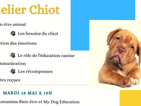 Atelier Chiot : mardi 18 mai à 19h