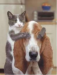 chien chat rigolo.jpeg