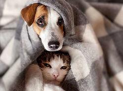 Chat-et-chien-malades_Tatyana-Gladskih-stock.adobe_.com-800-e1542731072246.jpg