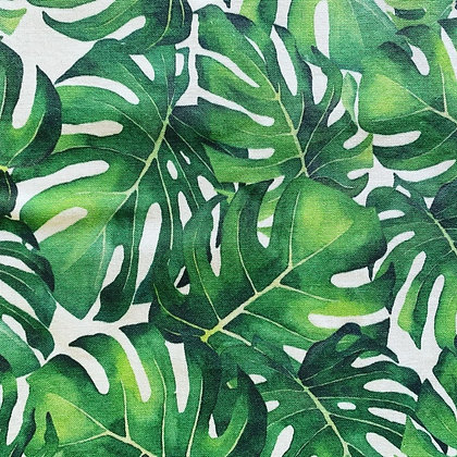 Monstera-Limited
