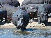 MalawiAfricacountryimage-139981305626525
