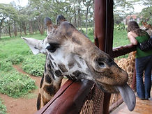 Kenya-Uncovered-2013-Itinerary-2-1917313