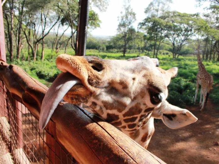 NairobiElephantsGiraffeesItinerariesDayT
