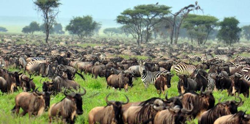 Wildebeest-Migration--Africa-Overland-Sa