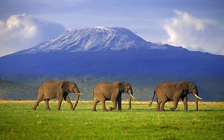 Elephants and Tanzania.jpg