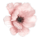 PINK FLOWER PNG.png