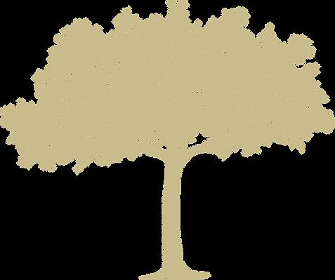 RememberSambor_Tree_Symbol_Light.png