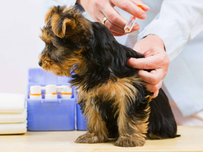 Puppy Vaccine Schedule Recommendations