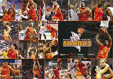Sharks 2011