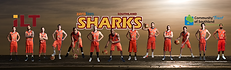 Sharks 2012