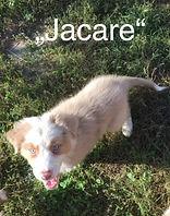 Jacare_edited.jpg