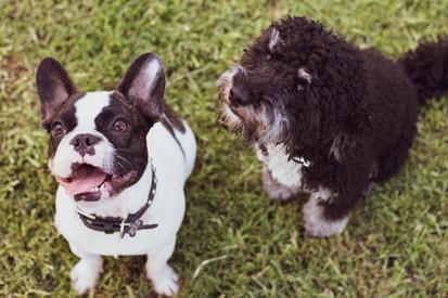 Ace & Presley