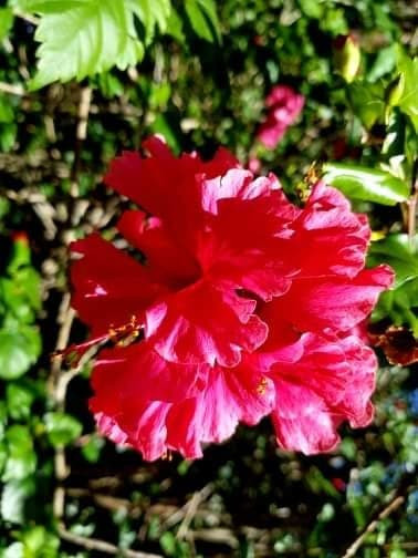 Summerhills Retreat - Hibiscus Villa - Byron Bay