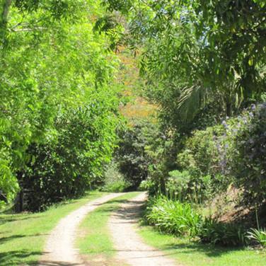 Garden Walks