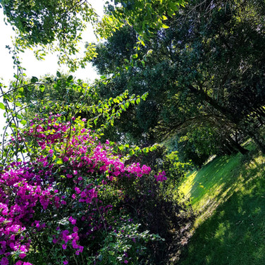 Flowers & Fauna