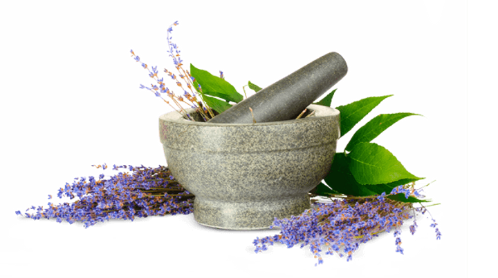 mortar-pestle-herbs-600pxw.png
