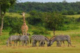 calauit-safari-tour-coron-busuanga.jpg