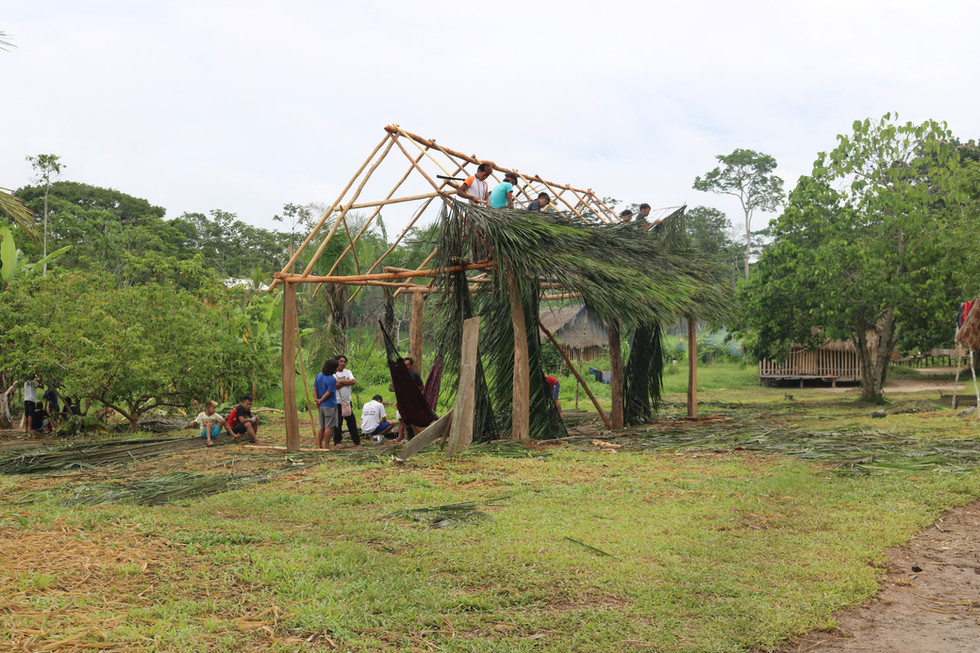 Villagers were building the roofs of the new malocas* with the leaves of the Urikuri- Palm. *Malocas are called the traditional houses of the indigenous people.